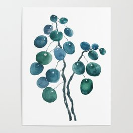 Chinese money plant watercolor Poster
