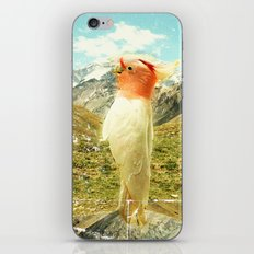 Parrot Mountain iPhone & iPod Skin