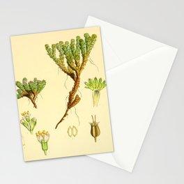 Vintage Botanical illustration, 1844 (Succulent) Stationery Cards