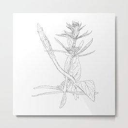 twisting vine Metal Print