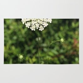 Queen Anne's Lace. Rug