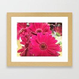 Pink Gerbera Daisies Framed Art Print