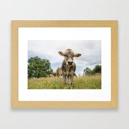 Brown Swiss Heifer Framed Art Print