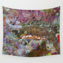 Orange Nudi Flabellina Wall Tapestry