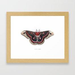 Cecropia Moth Framed Art Print