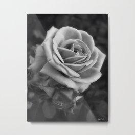 Pink Roses in Anzures 2 B&W Metal Print