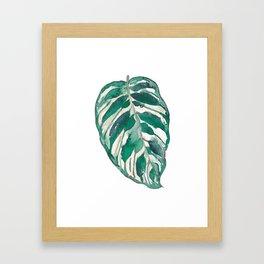 Peacock leaf Framed Art Print