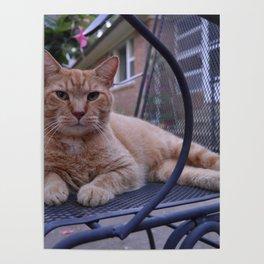 Relaxing Cat Poster