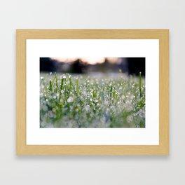 Dew Laden Grass 2 Framed Art Print