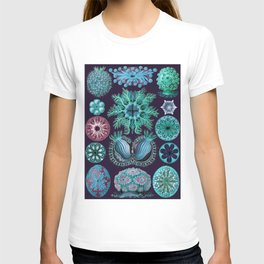 Ernst Haeckel Ascidiae Sea Squirts Teal on Purple T-shirt