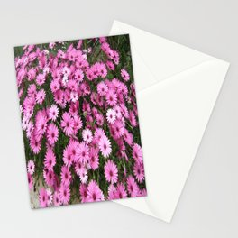 DAISIES IN PINK Stationery Cards