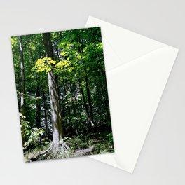 Tree Up Ravine Stationery Cards