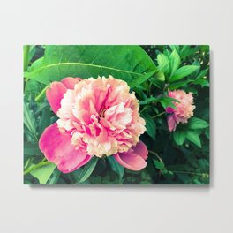 Paeony love Metal Print