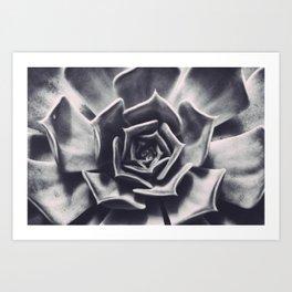 White Mexican Rose Succulent Photo Print Wall Art Image Art Print