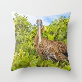 Big Pelican at Tree, Galapagos, Ecuador Throw Pillow