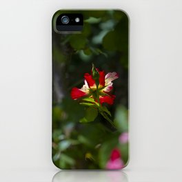 Red Tea Rose iPhone Case