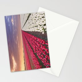 I - Rows of colourful tulips at sunrise in The Netherlands Stationery Cards