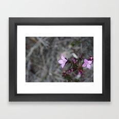 Purple Haze Framed Art Print
