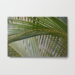 Textures - Palm Fronds Metal Print