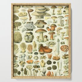 Wild Mushroom Chart Serving Tray