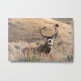 Mule Deer #01 Metal Print