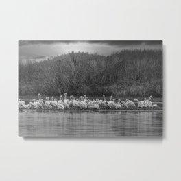 White Pelican Fleet 6801 B & W - Northwestern Nevada Metal Print