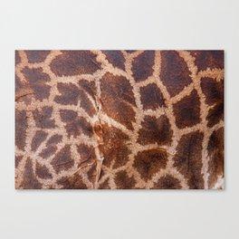 Giraffe Fur Canvas Print