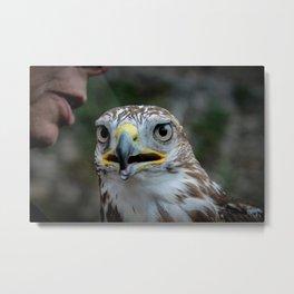 Golden Eagle 1 Metal Print