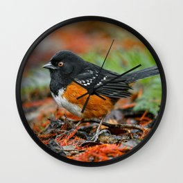 Profile of a Spotted Towhee Wall Clock