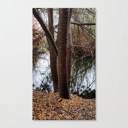 SDRV   Fallen Leaves Canvas Print