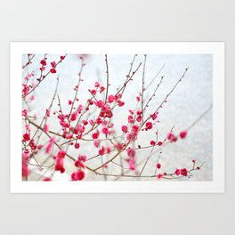 Beautiful Cherry Blossoms at the Imperial Palace in Kyoto, Japan Art Print