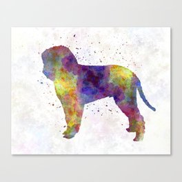 Romagna Water Dog in watercolor Canvas Print