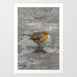 Robin on Ice Art Print