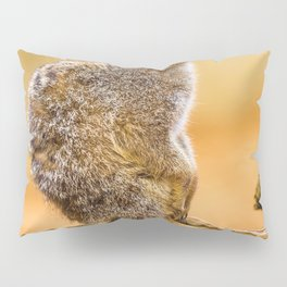 Meerkat (Color) Pillow Sham