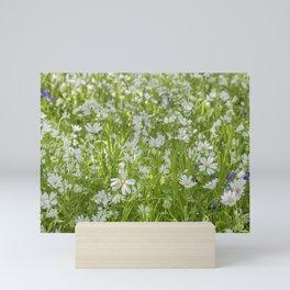 Wild Woodland Anenomes Mini Art Print