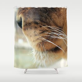 Whiskers. Shower Curtain