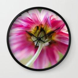 Padre Cerise Belgian Mum Reverse Wall Clock