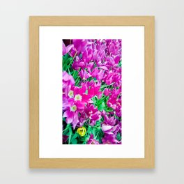 The beauty of the violet. Framed Art Print