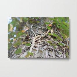 Creeping Vine Metal Print