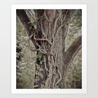 Tree And Vine Art Print