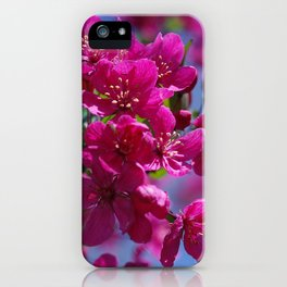 Rosy spring crabapple blossoms - Malus 'Prairifire' iPhone Case