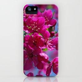 Rosy spring crabapple blossoms - Malus 'Prairifire' iPhone Case