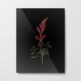 Antirrhinum Majus  Mary Delany Delicate Paper Flower Collage Black Background Floral Botanical Metal Print