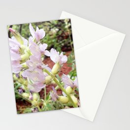 Watercolor Flower, White Locoweed 02, Lyons, Colorado Stationery Cards