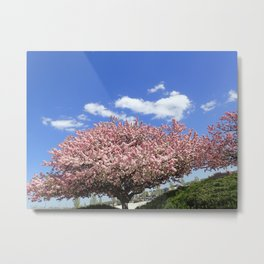 pink flowering tree Metal Print