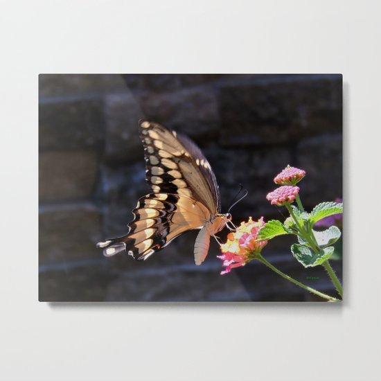 Swallowtail Overexposed Metal Print