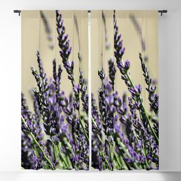 Bright and purple lavender background Blackout Curtain