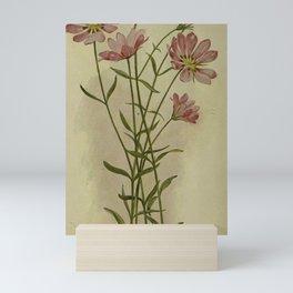 Vintage Botanical Print - Sabbatia Mini Art Print