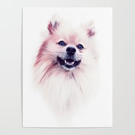 The Smiling Pomeranian Poster