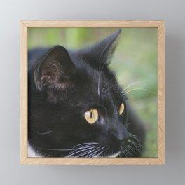 Black cat potrait Framed Mini Art Print
